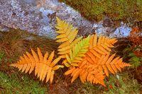 Fall_foliage_7