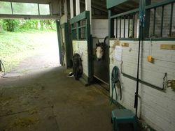 More life, horses, healthy food etc 024