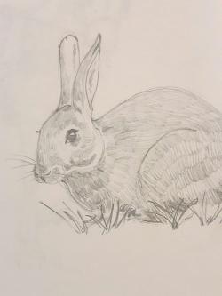 Bog illo rabbit