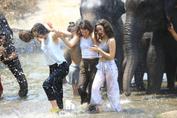 Elephantsplash